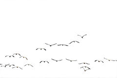 Flock flying to the sun(isolated). Royalty Free Stock Images