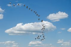 Flock of geese. Flock of flying canadian geese across a cloudy blue sky Royalty Free Stock Photography