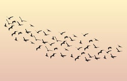 Flock of Geese flying in the dawn on the sky. Vector Stock Photography
