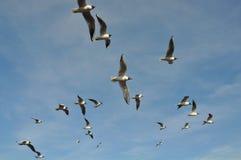 Flock of Gulls stock photos