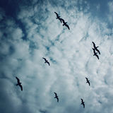 Flock of gulls against blue sky. Cloudy summer day. Stock Image