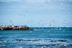 Flock of gulls in a harbour Stock Image