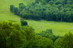 Flock on  the hillside Royalty Free Stock Images