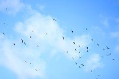 Flock i himmel royaltyfri foto