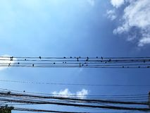 Flock if birds stands on messy electricity cable with bright blue sky in the background. Royalty Free Stock Image
