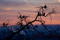 Flock of magpies sitting on a tree during sunrise Royalty Free Stock Photos