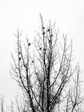 Flock of migrant birds Stock Photo