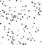 A flock of migratory birds. Royalty Free Stock Images