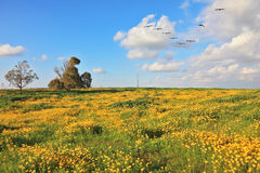 A flock of migratory birds in the sky. A lovely spring day in southern Israel. Flowering fields and the bright blue sky. A flock of migratory birds in the sky Royalty Free Stock Photography