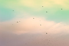 A flock of migratory birds in the sky. Creative vintage filter, retro effect Royalty Free Stock Photos