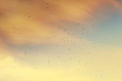 A flock of migratory birds in the sky. Royalty Free Stock Photography