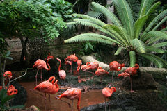 Free Flock Of Flamingos Stock Images - 6077404