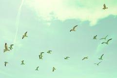 Flock Of Seagulls Royalty Free Stock Photo