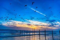 Free Flock Of Seagulls In Daytona Beach, Florida, USA Stock Photography - 128286302