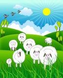 Flock Of Sheep In Farm Stock Photo