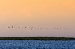 Flock over the water Royalty Free Stock Image