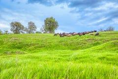 Flock på den gröna kullen royaltyfri fotografi