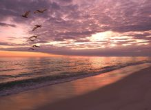 Flock of Pelicans Fly Over The Shoreline at Sunset Royalty Free Stock Photos