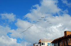 Flock of pelicans flying in formation over Laguna Beach, California. Royalty Free Stock Photo