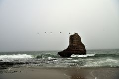 Flock of Pelicans Flying over Davenport Rock. A Flock of Pelicans Flying past the giant rock in Davenport Beach, California royalty free stock photo