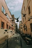 Flock of Pigeon Stock Photo
