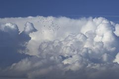 Flock of pigeons above a cloud formation stock photo