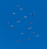 A flock of pigeons on a blue sky.  Royalty Free Stock Photos