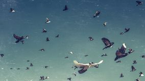 Flock of Pigeons In A Blue Sky, Vintage Toned And Scratches. Freedom Destination Travel Concept Royalty Free Stock Images