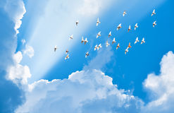 Flock of pigeons flying in blue sky Royalty Free Stock Image