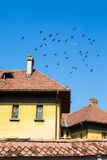 Flock of pigeons flying over the roof Royalty Free Stock Image