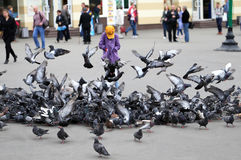 Flock of pigeons. Large flock of pigeons in the city center Stock Photo