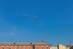 Flock of pigeons over the city Royalty Free Stock Images