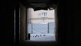Flock of pigeons picking leftovers in dirty backstreet, crime scene, bad sign stock video footage