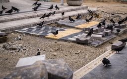 Pigeon Covey On A Walk Path Construction Site - Turkey. Flock of pigeons on a public walking trail construction site in the central square eating the bird food stock photos