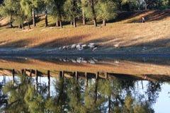 Flock riverside stock image