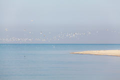 Flock of sea birds on the background of the foreland Royalty Free Stock Photo