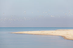 Flock of sea birds on the background of the foreland Stock Photography