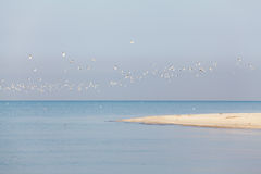 Flock of sea birds on the background of the foreland Stock Photo