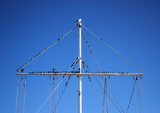 Flock of sea birds sitting on a boat mast Royalty Free Stock Photography