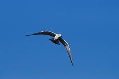 Flock of Sea Gulls Stock Photo