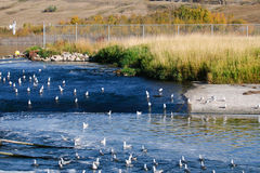 Flock of Sea Gulls stock photos
