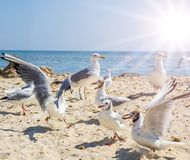 Flock of sea white gulls on the sand royalty free stock photos