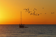 Flock of Seabirds and Sailboat at Sunrise - Florida Royalty Free Stock Images