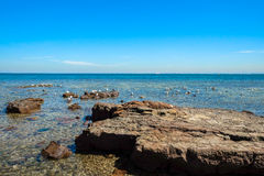 Flock of seagull on the rocky shore Stock Photography