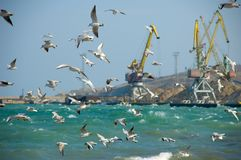 Flock of seagulls. (in focus) against a port background stock image