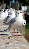 Flock of Seagulls. On the ledge of a wall appreciating the view Stock Photos