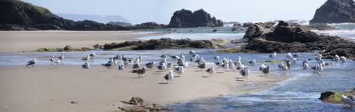 Flock of seagulls on beach Stock Image