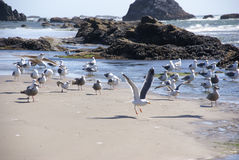 Flock of seagulls on beach Stock Photo