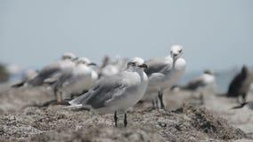 Flock of seagulls stock video footage