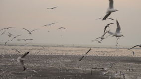 Flock of seagulls and birds flying high In the sky at sunset or twilight time. Super slow motion 120p stock footage